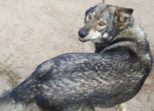 My Dog Shadow by Mary-Jo Fairbanks of Leech Lake Tribal College