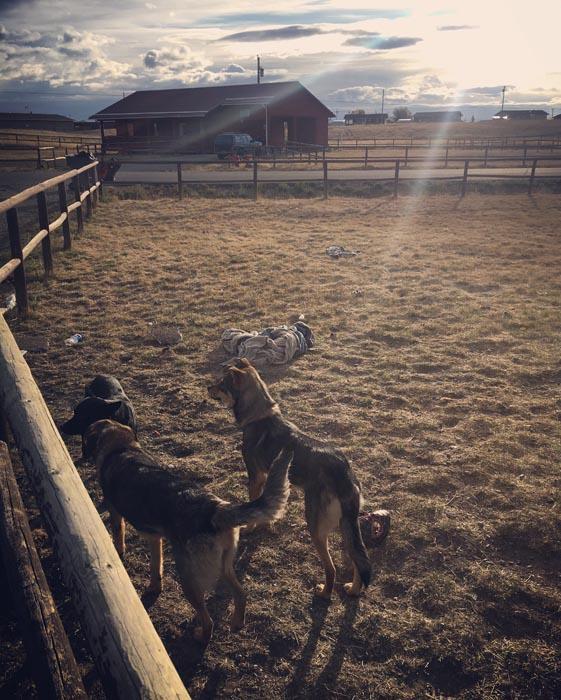 Trash Guardians by Jamison Aimsback of Blackfeet Community College