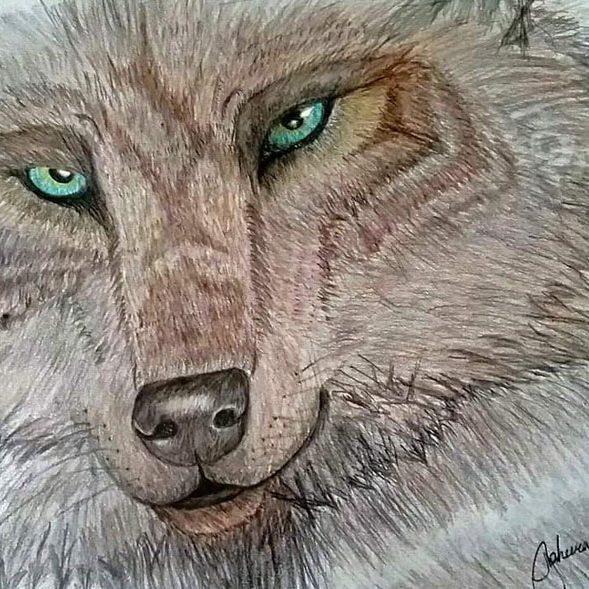 Wolf by Taheera Old Elk of Little Big Horn College